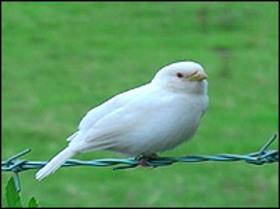 _44034106_whitesparrow203_200710311